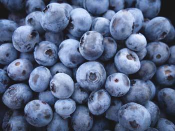 Heilrezepte mit Blaubeeren aus dem Heilpflanzenlexikon von Dr. med. dent. Nicole Wagner